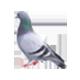 Bird (Pigeon) Control