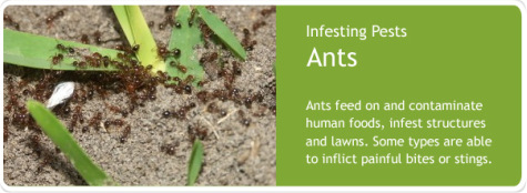 ants-control-service