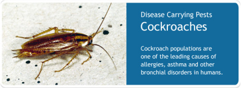 cockroach-control-service