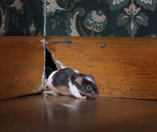 mouse-in-wall