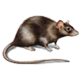 rodent_icon