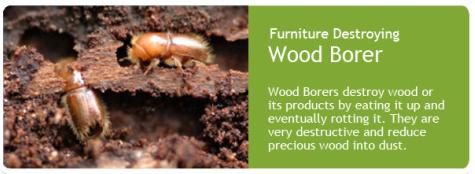 wood-borer-control-service